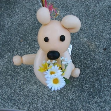 I have Daisies for you!